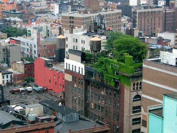 toiture végétalisée en plein centre-ville